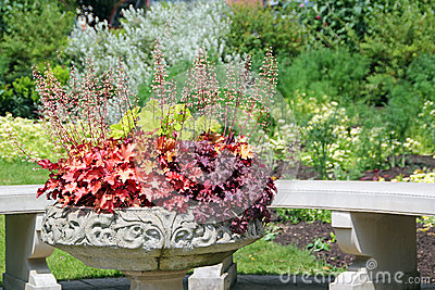 Ornamental potted plants