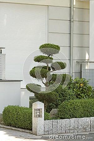 Ornamental pruned shrub