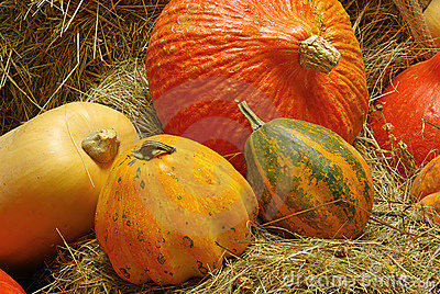 Ornamental Pumkin 05 Royalty Free Stock Photography - Image: 6840197