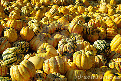 Ornamental pumkin