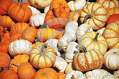 Zucche ornamentali halloween