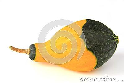 Ornamental squash