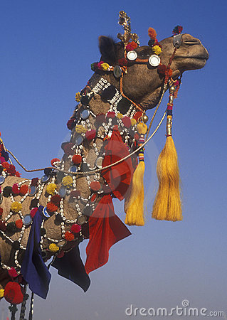 Ornate Camel