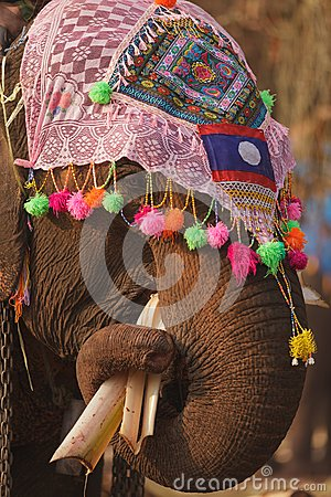 Ornate elephant eating