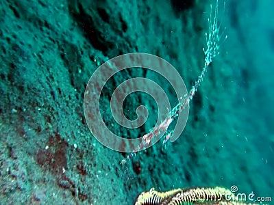 Ornate ghostpipefish Solenostomus paradoxus in Raja Ampat stock video footage