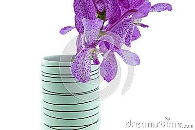 Orquídeas rosadas del mokara en el florero aislado en el fondo blanco