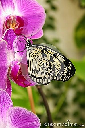 Orquídea y mariposa.