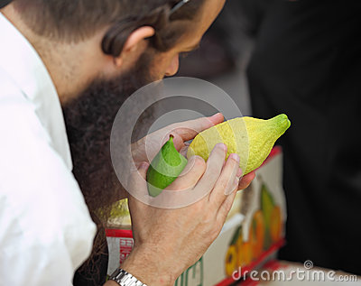 An orthodox  picks citrus before the Sukkot Editorial Stock Photo