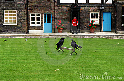 Os corvos na torre de Londres (Inglaterra)