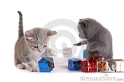 Os jogos do gatinho com presentes