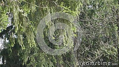 Os ramos do balanço da árvore no vento vídeos de arquivo