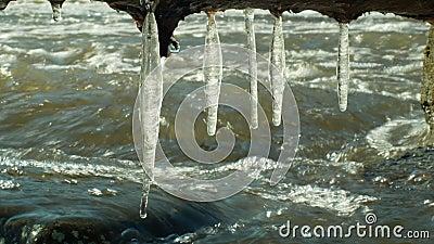 Os sincelos molham o rio Morava na mágica congelada inverno e no branco mágico, pendurando da saliência, fluindo para baixo com p filme