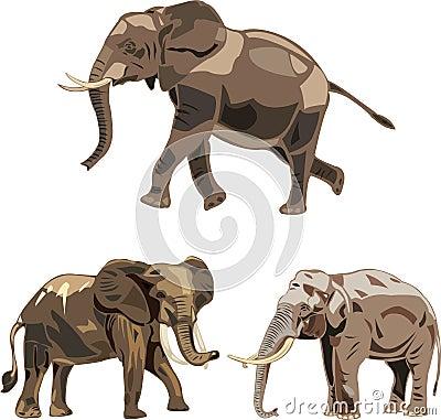 Os tipos do mundo três dos elefantes