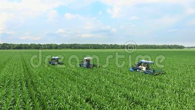 Os tiros novos do milho no campo nas fileiras, uma exploração agrícola para o milho crescente, tratores da agricultura analisam g video estoque