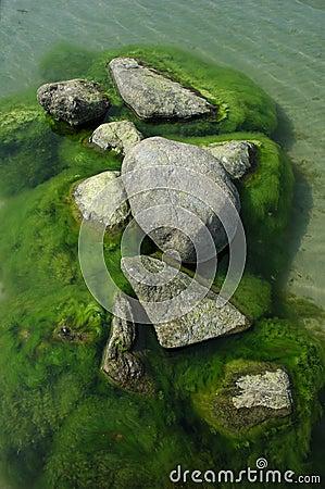 Roches dans l eau avec l algue