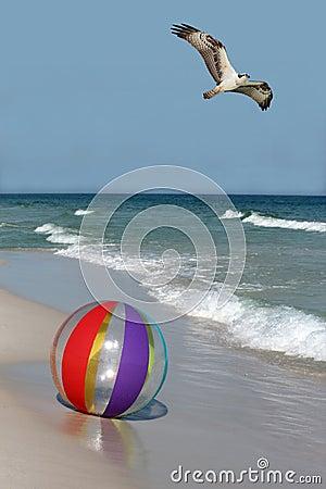 Osprey Flying over a Beach Ball on the Beach