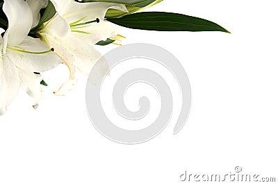 Osterlilien