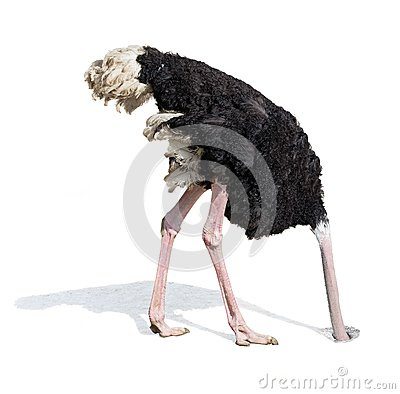 Free Ostrich Burying Head In Sand Ignoring Problems Stock Images - 56142454