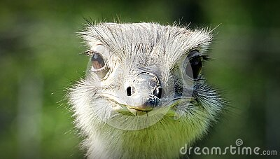 Ostrich Face During Daytime Free Public Domain Cc0 Image