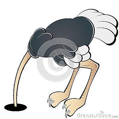 Ostrich hiding head