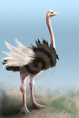 Ostrich - painting