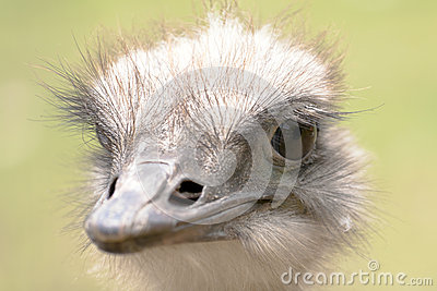 The ostrich portrait.
