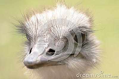 The ostrich portrait.
