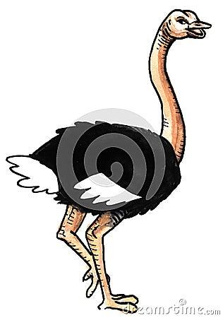 Ostrich in run