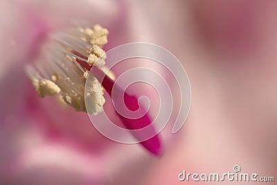 Ostrości pollen