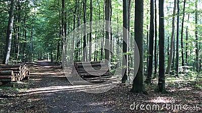 Otoño danés del bosque almacen de metraje de vídeo
