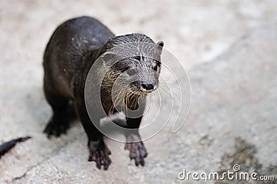 Otter in its habitat