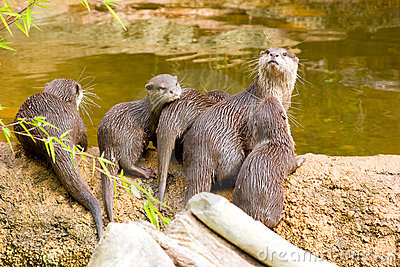 Otter with offspring