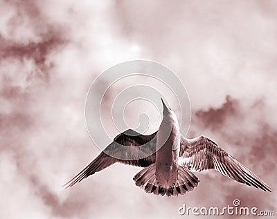 Otwarte skrzydeł ptaków