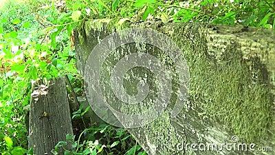 Oude en verlaten die bank in de bergrugleuning met gras in de zomer wordt behandeld stock video