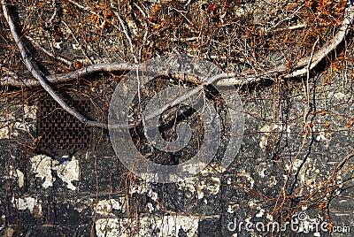 Oude Geweven Muur