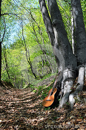 Oude gitaar in een bos