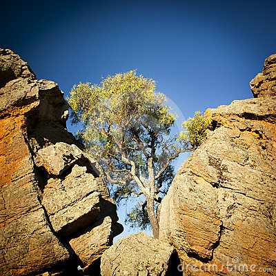 Outback Tree