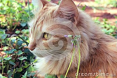 Outdoor Cat Portrait Free Public Domain Cc0 Image