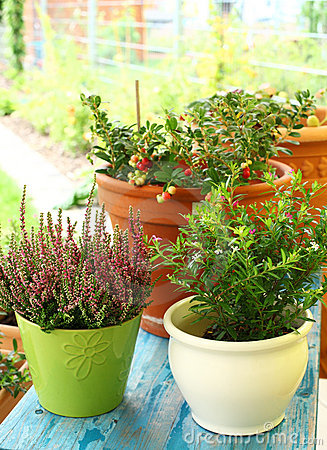 Free Outdoor Flower Pots Royalty Free Stock Images - 20720459
