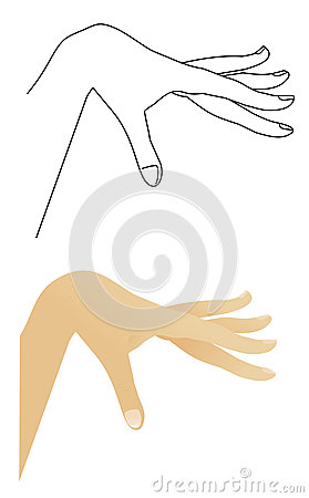 Outline of the hand