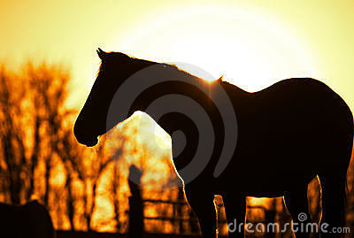 Outline Of The Horse. Royalty Free Stock Photography - Image: 4368977