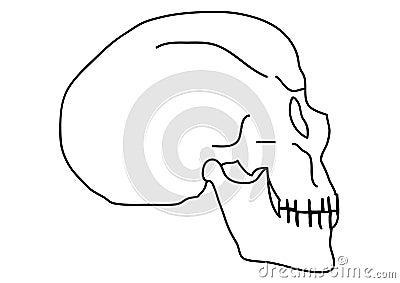 Outline skull