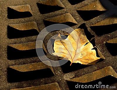 Outono oxidado