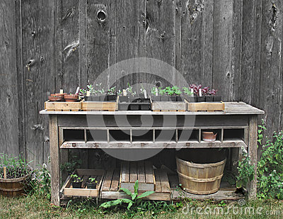Outside gardening table with plants.