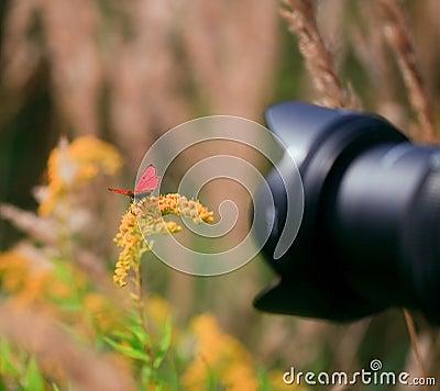 Outside macro photoshooting