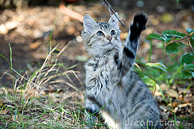 Outside Portrait of a cute kitten playing
