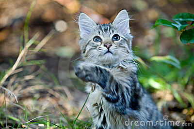 Outside Portrait of a cute kitten playing
