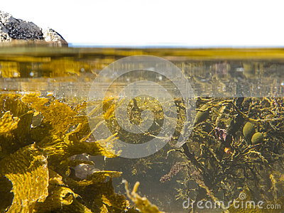 Over-under split shot of clear water in tidal pool