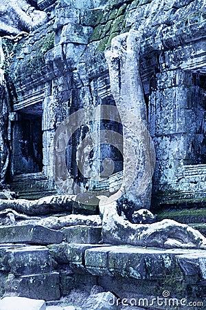 Overgrown ruins- Cambodia