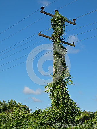 Overgrown telephone pole